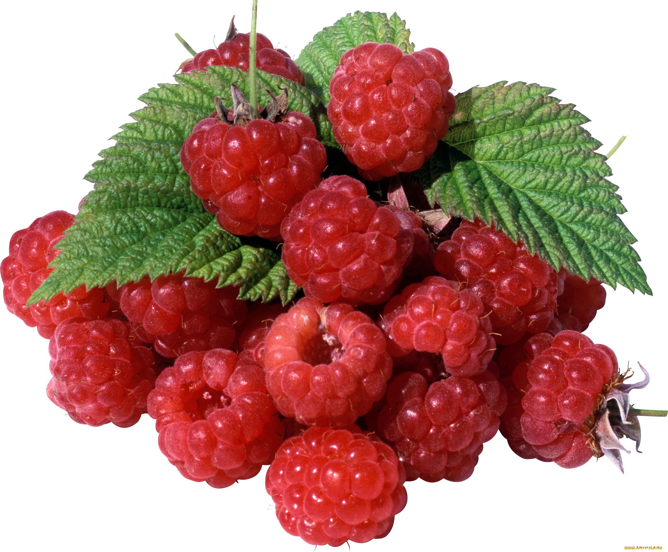 ягода малина картинка цветная можете приобрести